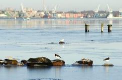 Wild birds in winter stock image