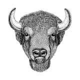 Wild Bison Large mammal Hand drawn illustration Stock Images