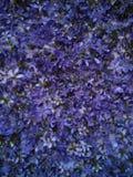 wild blåa blommor Arkivfoto