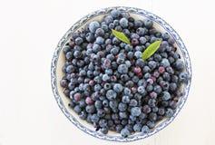 wild blåbär Fotografering för Bildbyråer