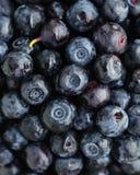 wild blåbär Arkivbilder