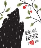 Wild Black Bear Loves Raspberry Royalty Free Stock Photos