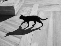 Wild Black Cat-bw. Wild black cat (photo is bw too) walking on a marble floor. Shadow is nice Stock Photo