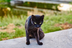 Wild black cat in park Stock Photos