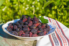 Wild black mulberry Royalty Free Stock Photos