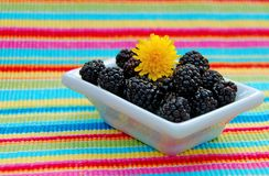 Wild Black Raspberries. Dish of wild black raspberries with blossom on top of colorful placemat Stock Images
