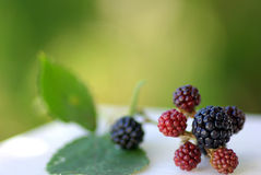 Wild Blackberries. In the fields of the region alentejo, Portugal stock images
