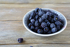 Wild blackberries in a bowl Stock Photography