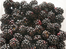 Wild blackberries up close on white background royalty free stock image