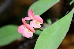 Wild bloem roze groen rood royalty-vrije stock afbeelding