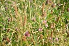 Wild bloemen en gras bij het bos Royalty-vrije Stock Afbeeldingen