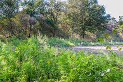 Wild bloemen landbouwgebied stock fotografie