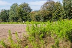 Wild bloemen landbouwgebied royalty-vrije stock afbeelding