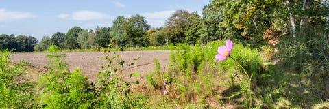 Wild bloemen landbouwgebied royalty-vrije stock foto