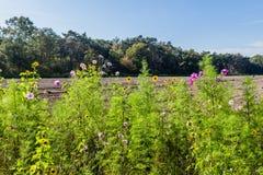 Wild bloemen landbouwgebied royalty-vrije stock fotografie