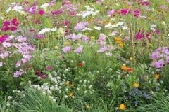 wild blommaäng Royaltyfria Bilder