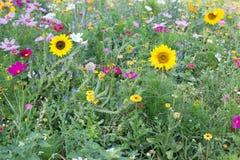 wild blommaäng Arkivbild