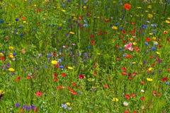 wild blommaäng Fotografering för Bildbyråer