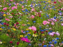 wild blommaäng Royaltyfria Foton