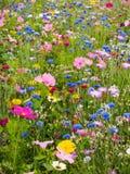 wild blommaäng Royaltyfri Foto