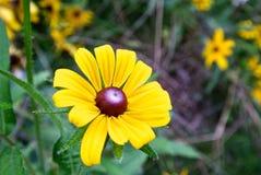 wild blomma Fotografering för Bildbyråer