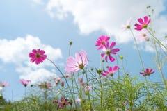 wild blomma Royaltyfri Fotografi
