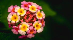 wild blomma Royaltyfri Foto