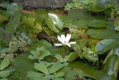 wild blomma arkivbild