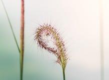 wild blomma Royaltyfri Bild