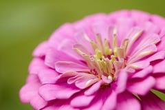 wild blomma Arkivfoton