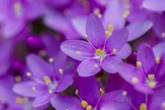 wild blomma royaltyfria foton