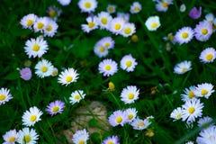 wild blomma royaltyfria bilder