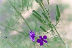 wild blomma Liten DOF Fotografering för Bildbyråer