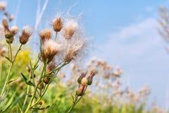 Wild blomma - närbild Arkivfoto