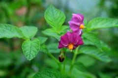 wild blommaberg Royaltyfria Bilder