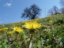 wild blommaberg Arkivbild