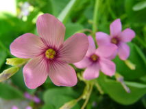 wild blommaberg Royaltyfri Fotografi