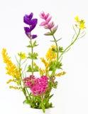 Wild blommabukett Arkivbilder