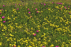 wild blommafjäder Arkivfoto