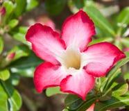 wild blommaorchid Arkivfoto