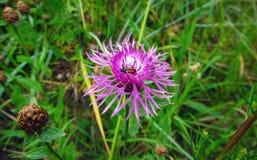 wild blommasommar Arkivfoton