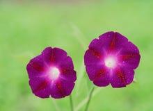 Wild blommor Arkivfoto