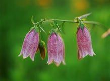 Wild blommor Royaltyfri Foto