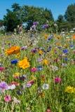 Wild blommor Arkivfoton