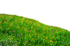 Wild blommor i ängen Arkivfoto