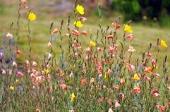 Wild blommor på laken Tarawera Royaltyfria Bilder