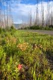 Wild blommor i Montana Royaltyfri Fotografi