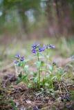 Wild blommor i skogen Royaltyfri Fotografi