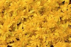 Wild blommor - Raison buske Arkivbild