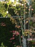 Wild blommor sätter in Royaltyfri Fotografi